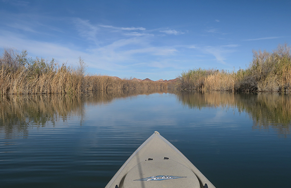 One of the numerous backwaters off the main channel of the Colorado River