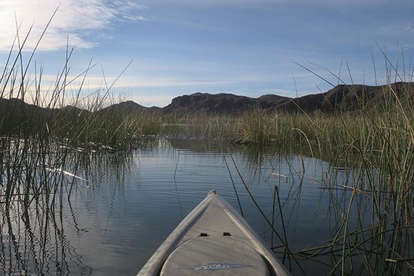 Kayak fishing for largemouth bass in the shoreline reeds