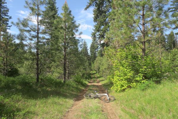 Sunny Cascade Mountain road