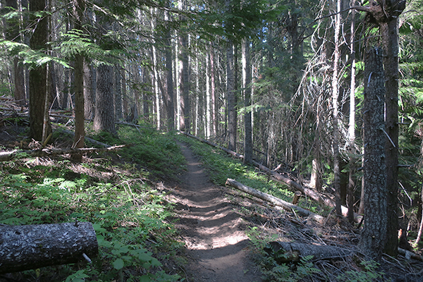 Cascade Mountain trail