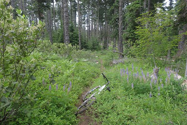 Cascade Mountain singletrack trail