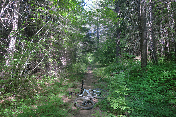 Cascade Mountain singletrack trail