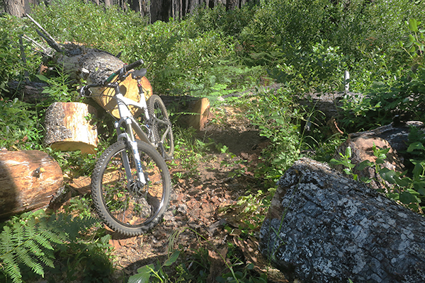 Clearing Cascade Mountain trail of blown down trees