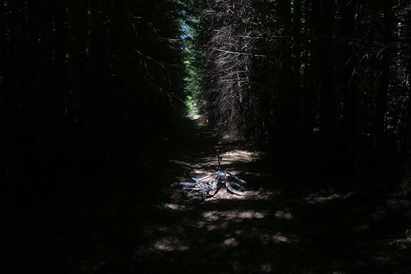 MTB riding on dark forest trail