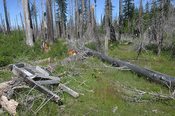 Trail head destroyed by large blown down trees