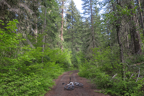 Great MTB riding in the PacNW