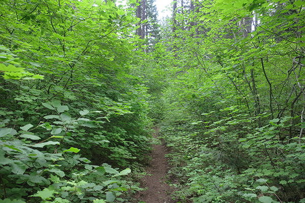 Green Cascade Mountain trail overcast conditions