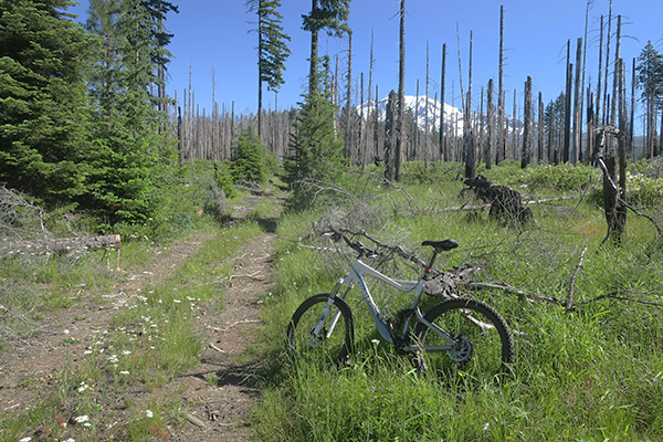 Riding mountain bikes near Mt Adams