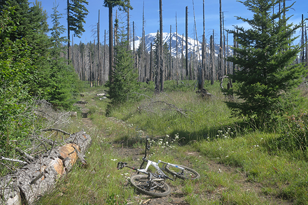 Mountain bike riding near Mt Adams
