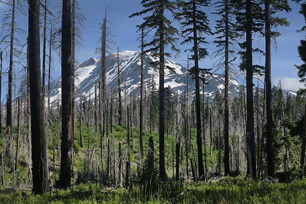 Mt Adams 7-17-20