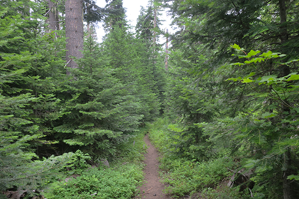 Cascade Mountain trail overcast conditions