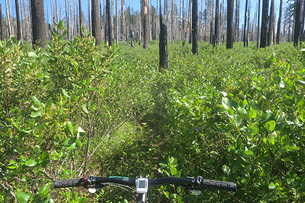 Overgrown Cascade Mountain trail