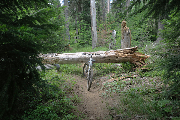 Fallen tree blocks trail