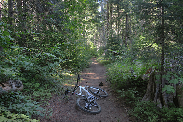 Early morning mountain biking on a Cascade Mountain trail