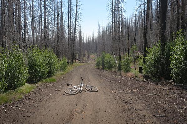 Early morning mountain biking on a Cascade Mountain road