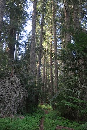 Dark Cascade Mountain trail