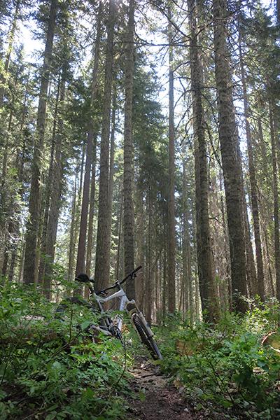 Deep, dark forest trail