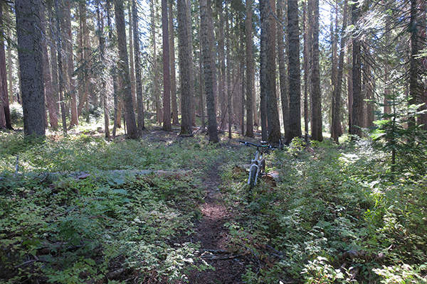 Perfect trail conditions after rain storm