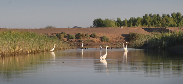 Fishing birds on the Colorado River