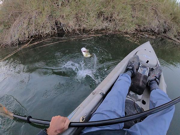 Kayak fishing for largemouth bass with watermanatwork.com