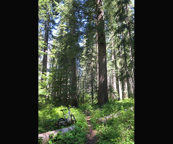 Cascade Mountain singletrack