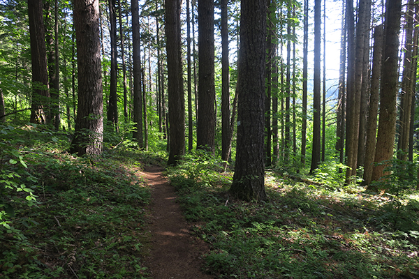 Early morning trail shadows mountain bike riding in the Cascade Mountains