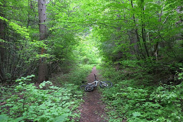 Green Cascade Mountain singletrack