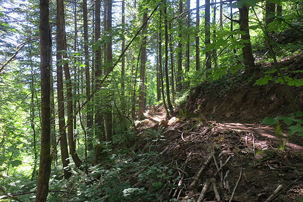 New section of local mountain bike trail