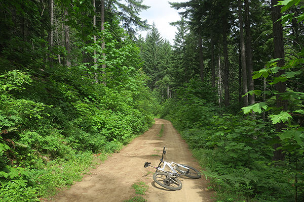 Partly sunny day on a Cascade Mountain road