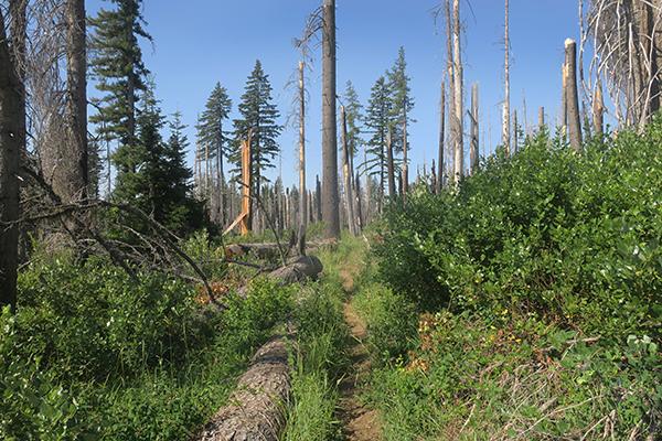 Cascade Mountain singletrack trail.