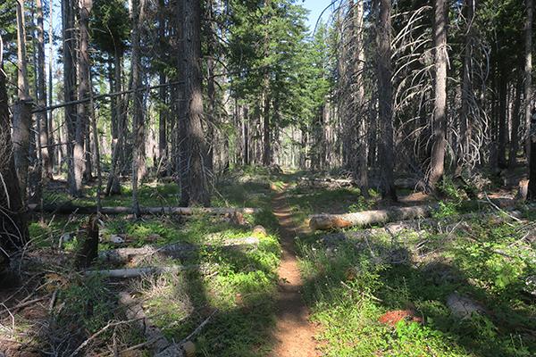 Cascade Mountain trail
