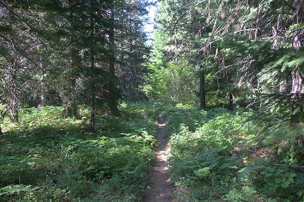 Green but dry Cascade Mountain trail