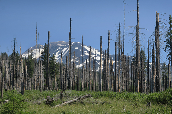 Burned out area of forest with Mt Adams in the distance