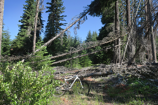 Mountain road closed by blown down trees
