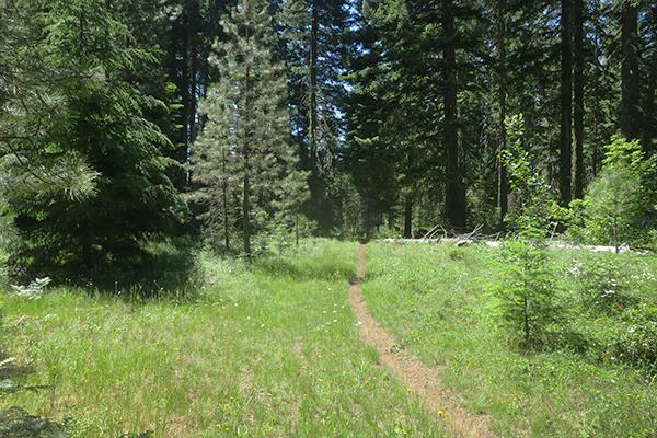 Trail through a sunny mountain meadow