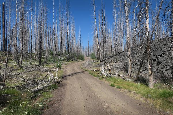 Forest Service over ancient Mt Adams lava flow