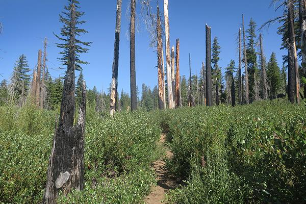 Mountain trail through burn area
