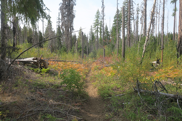 Dry and dusty Cascade Mountain trail