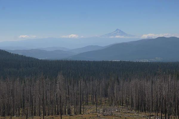 Looking across the Cascade Mtn foothills across the Columbia River to Mt Hood