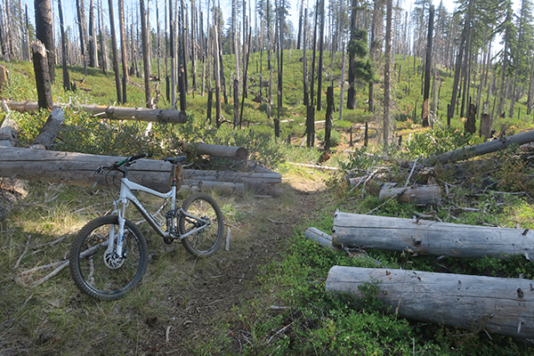 Bike riding on a remote Cascade Mountain trail