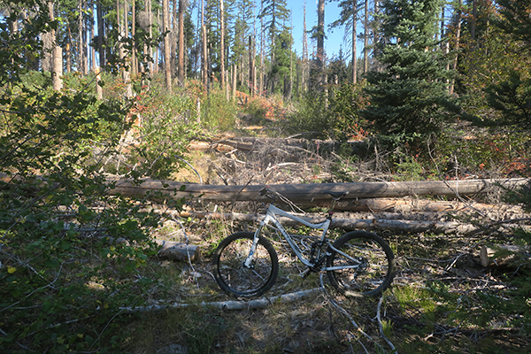 Mountain trail closed due to downed trees