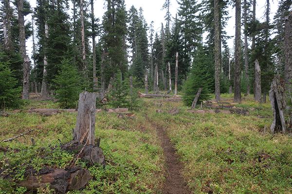 A damp trail on a rainy Cascade Mountain autumn morning