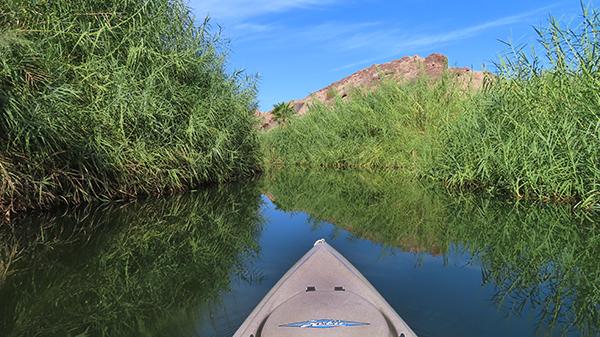 Kayak fishing Colorado River backwaters